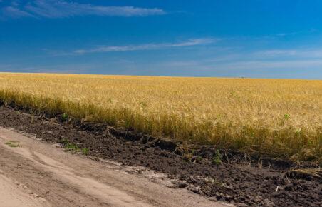 Chernozem soil